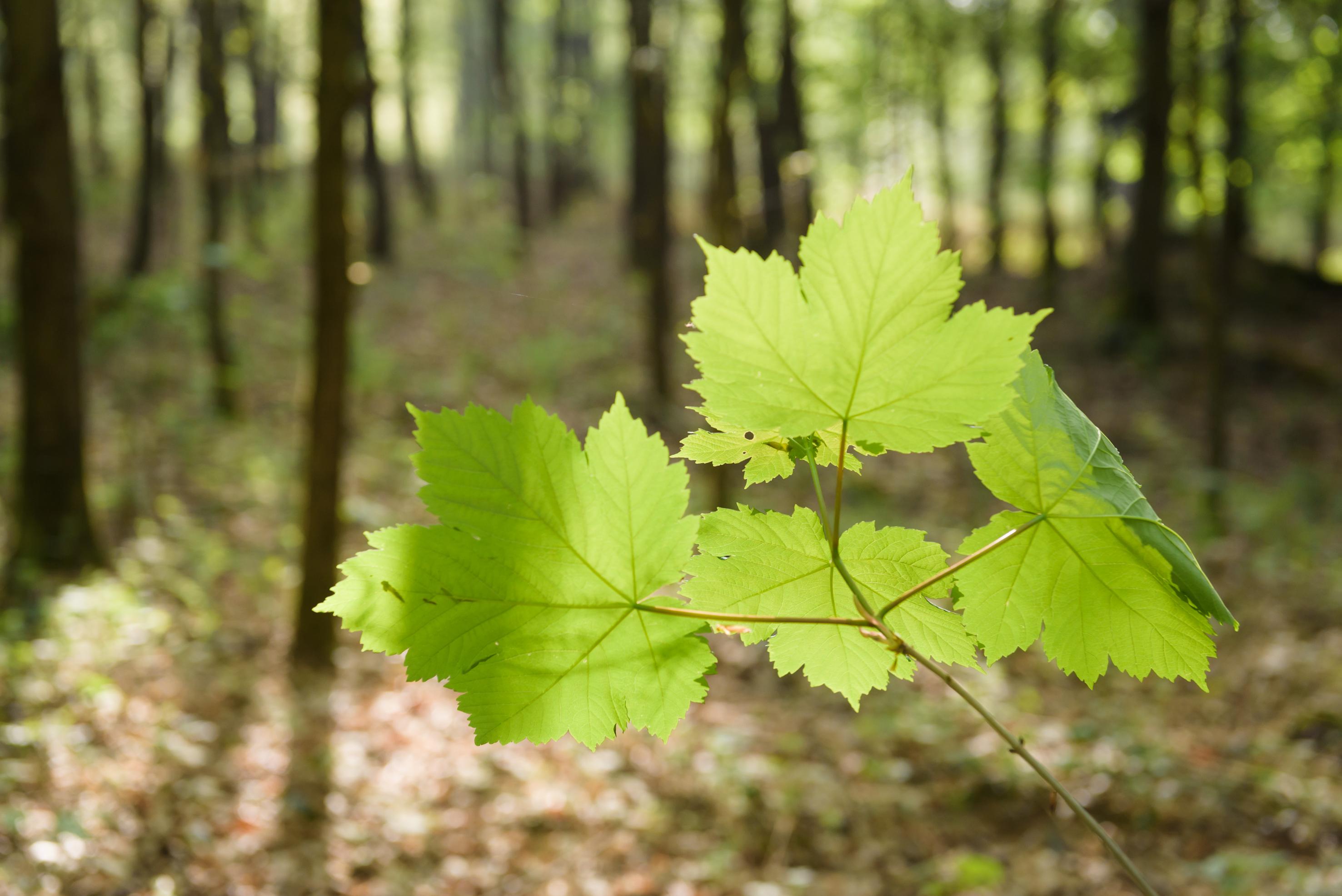 Changer de regard, forêt, arbres, énergie des arbres